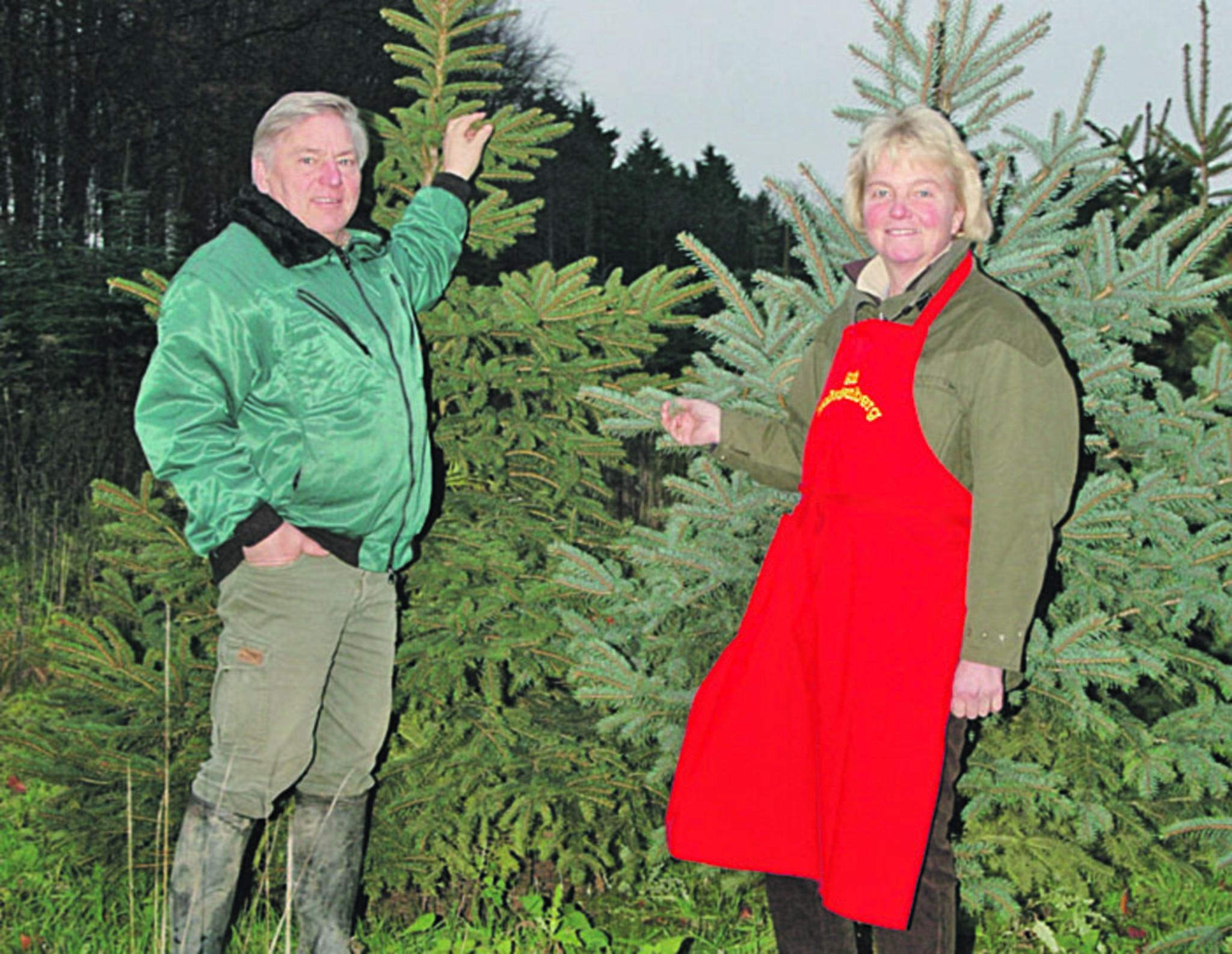Weihnachtsbaum Schwerte.Wer Hat Einen Weihnachtsbaum Verdient Gewinnen Sie Eine Tanne Aus