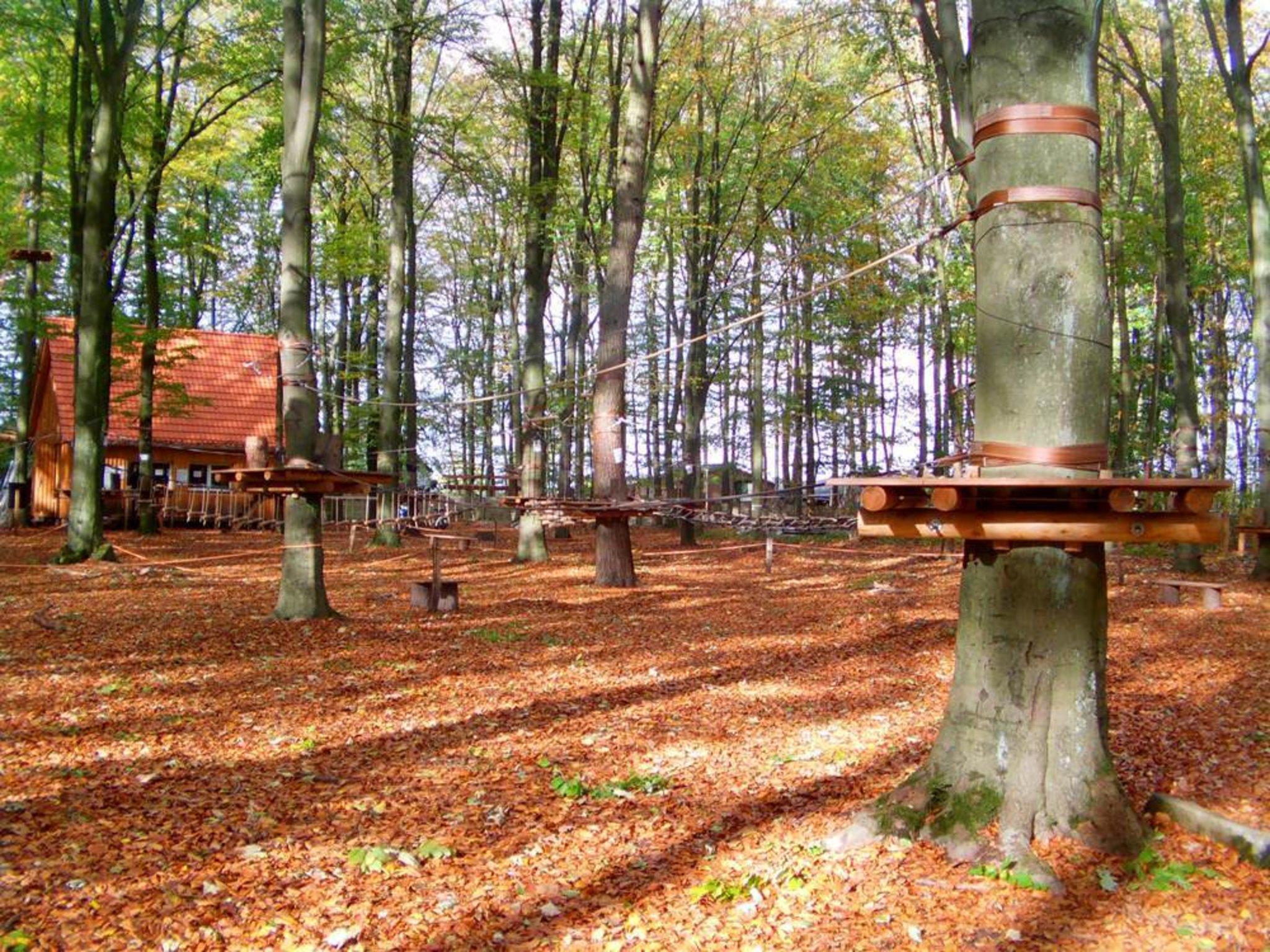 Der Wald Wird Gefegt Haltern