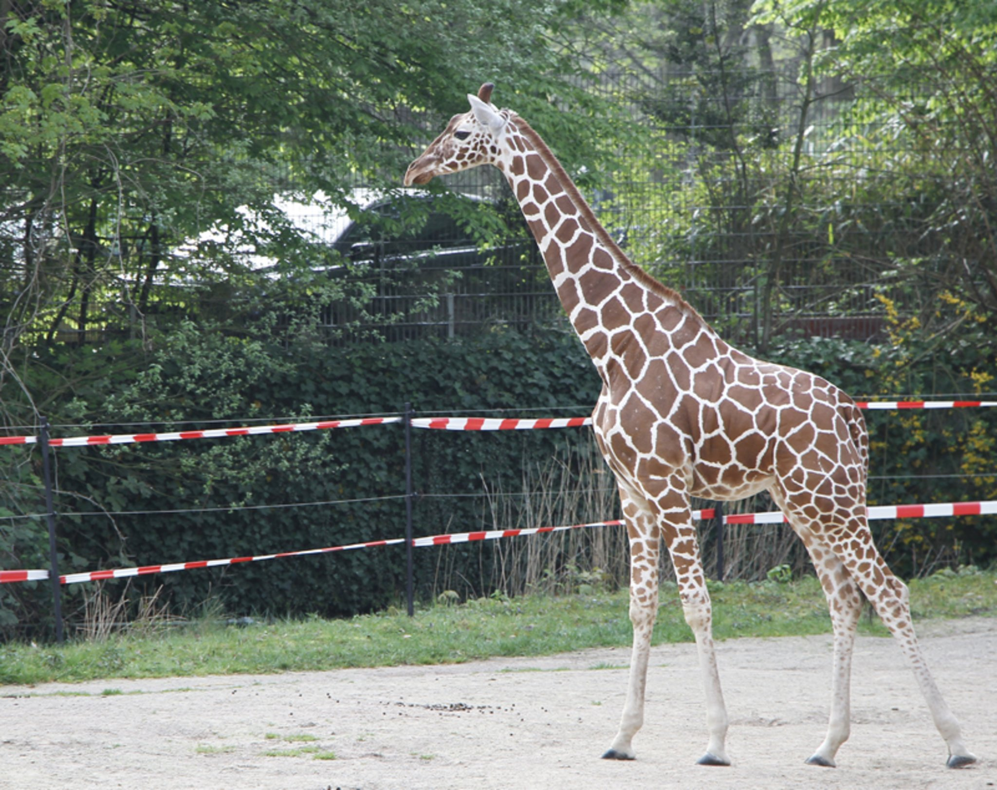 Kölner Zoo Patenschaft