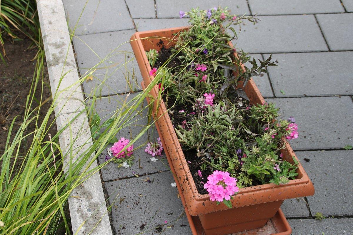 Hilfe Wer Zerstört Unsere Blumenkästen Emmerich Am Rhein