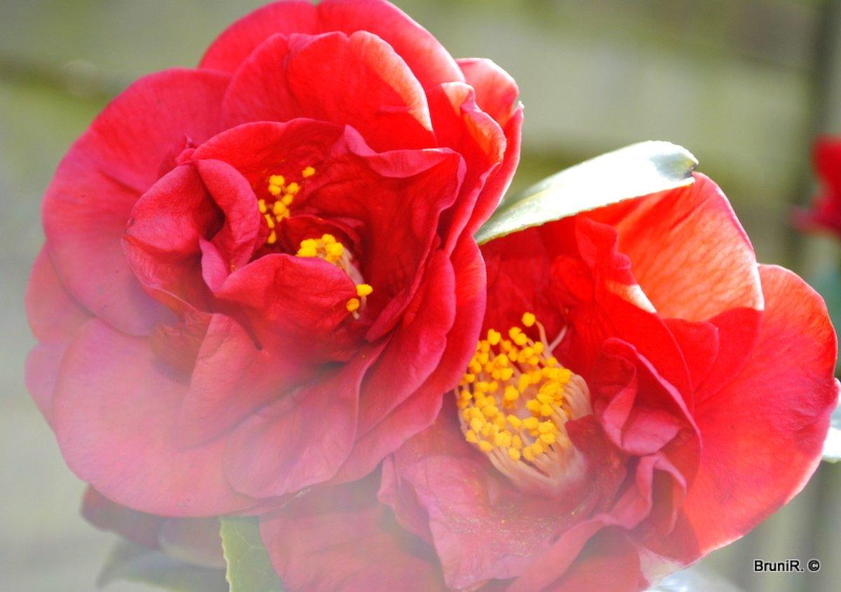 Tolle Blumen Bei Einer Lieben Bürgerreporterin Entdeckt