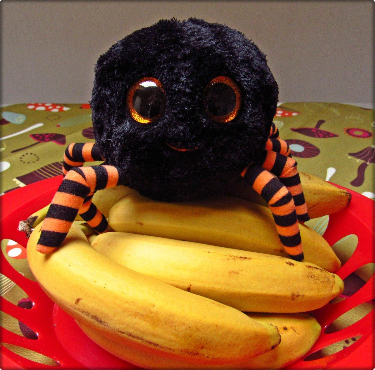 Geliebte Bananenspinnen, mit der Lizenz zum Töten - Mainstream-Panik im &NC_29
