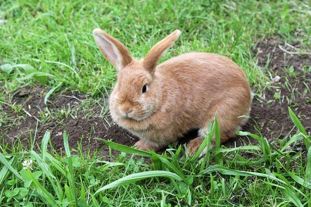 Sommer Birgt Gefahren Fur Kaninchen Lunen