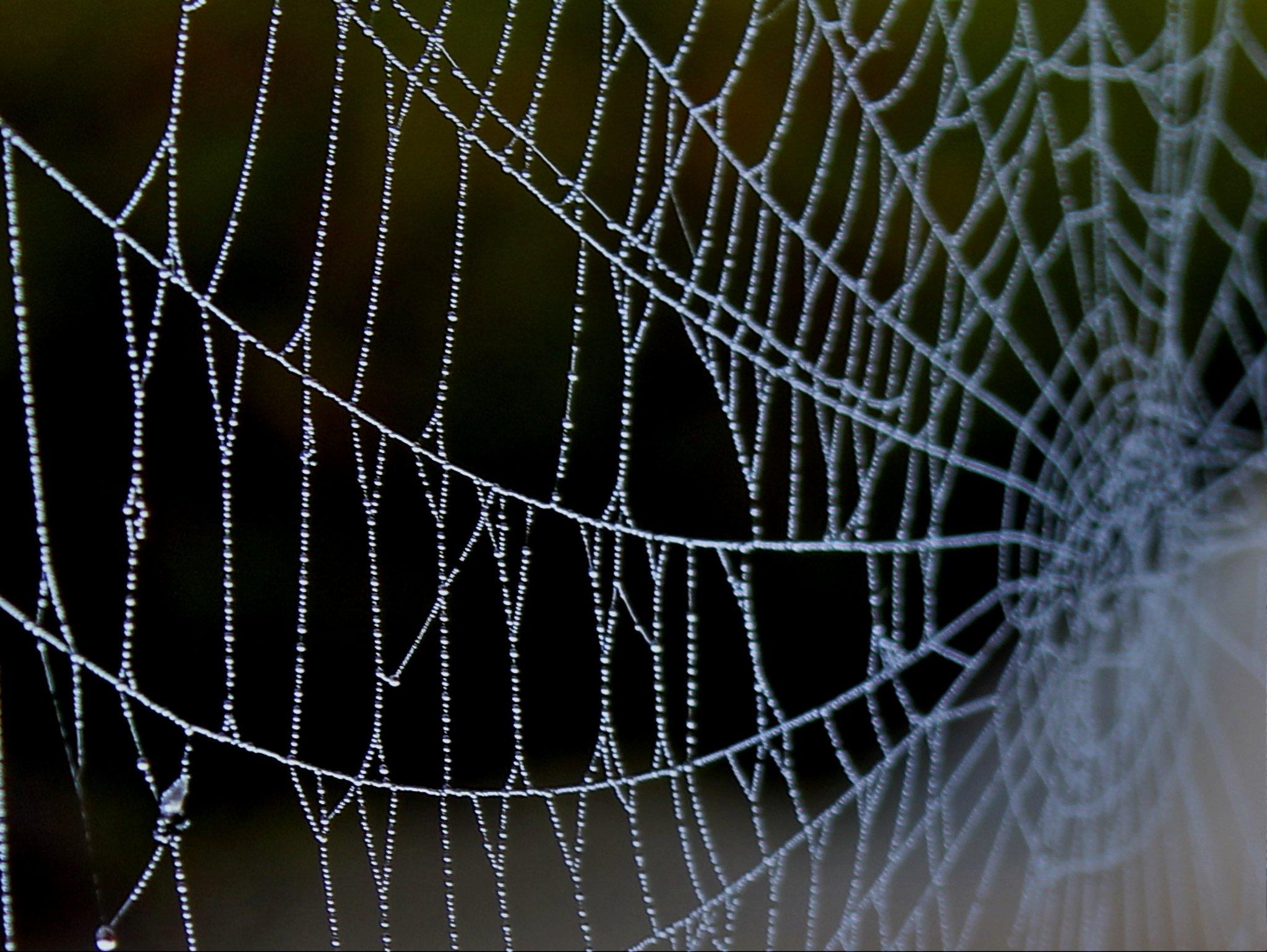 filligrane schönheit der naturspinnennetz mit morgentau