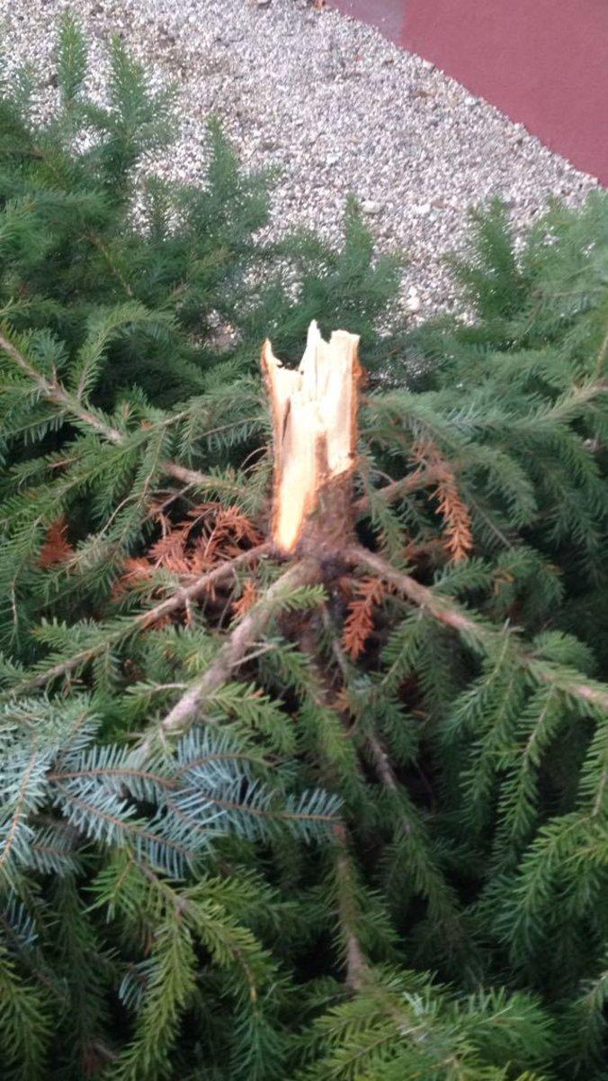Der Letzte Weihnachtsbaum.Weihnachtsbaum Thema