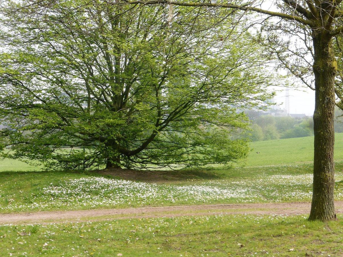 Frühling im Südpark Düsseldorf - Düsseldorf