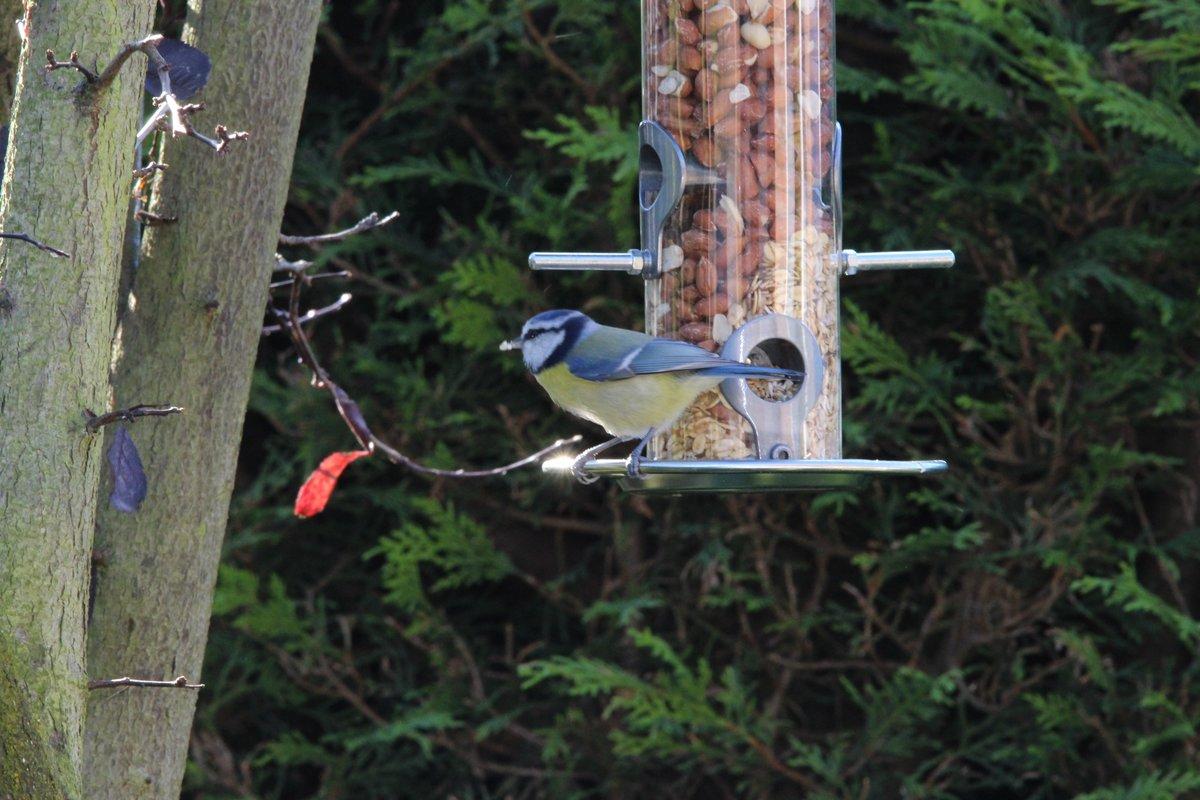 futterstation für vögel - bergkamen
