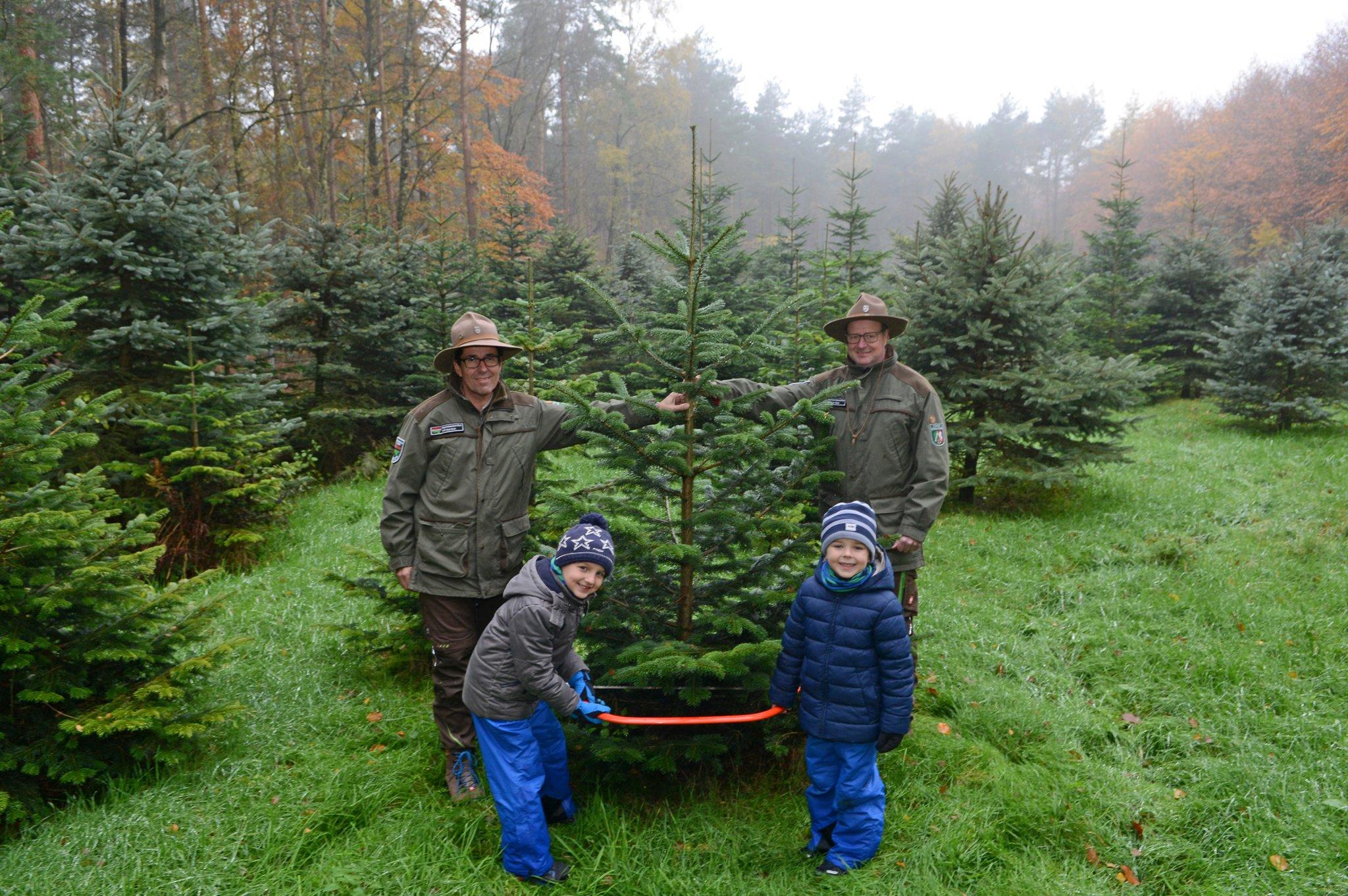 Tannenbaum Selber Schlagen.Weihnachtsbaume Schlagen In Der Hohen Mark Dorsten
