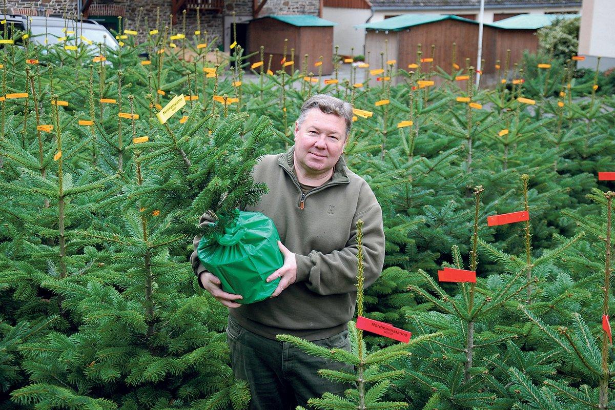Gedicht Weihnachtsgebäck.Hobby Poeten Aufgepasst Wer Möchte Einen Tannenbaum Für Ein Gedicht