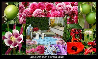 Blumen Und Pflanzen Thema