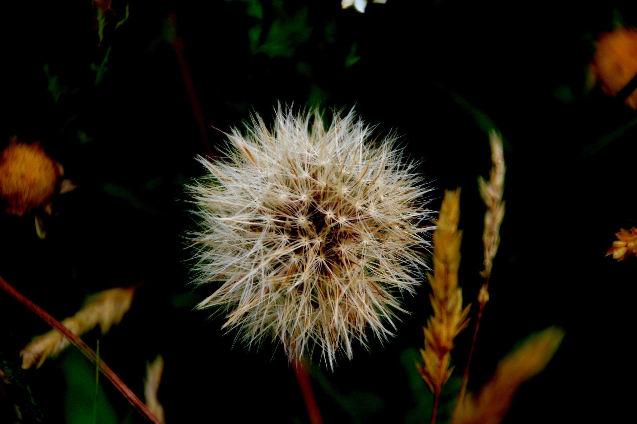 Blumenwiese Datteln