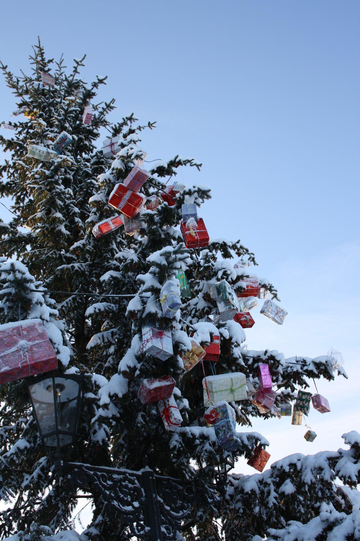 13 Tannenbäume sorgen für vorweihnachtliche Stimmung: Mitarbeiter ...