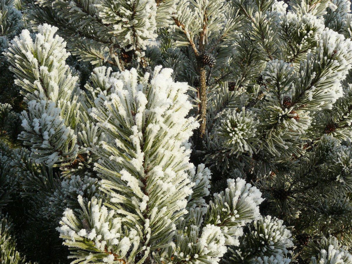 Geschichte Vom Weihnachtsbaum.Ein Bild Eine Geschichte Weihnachtsbaum Bergkamen