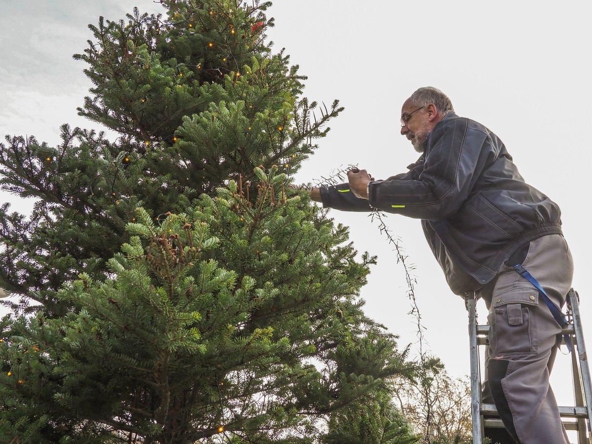 Spitze Für Tannenbaum.Prachtbaum Mit Vielen Liebhabern Verwaister Tannenbaum Heiß