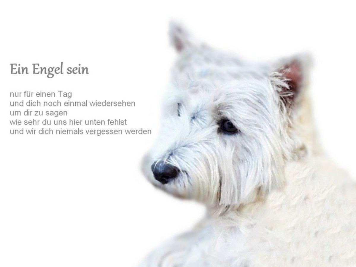 Lilly Im Regenbogenlandauch Eure Hunde In Gefahr Machs Gut