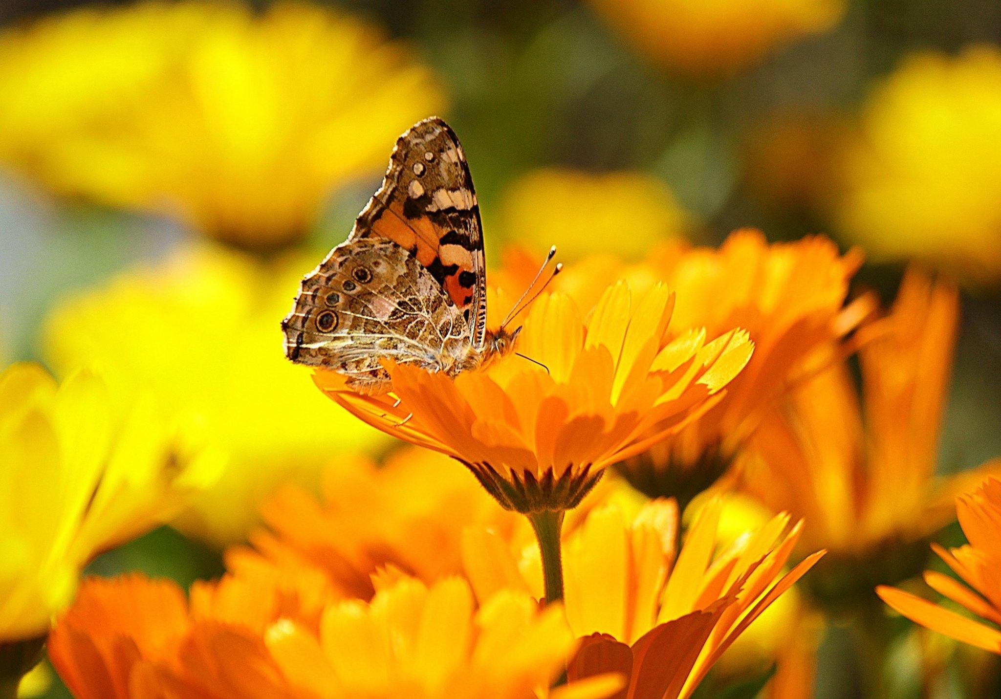 Vortrag über naturnahe Gartengestaltung Gladbeck