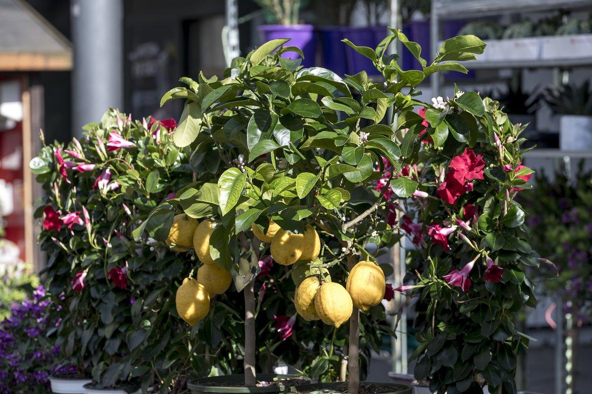 Am Wochenende Blüht Die City Auf Blumen Und Gartenmarkt