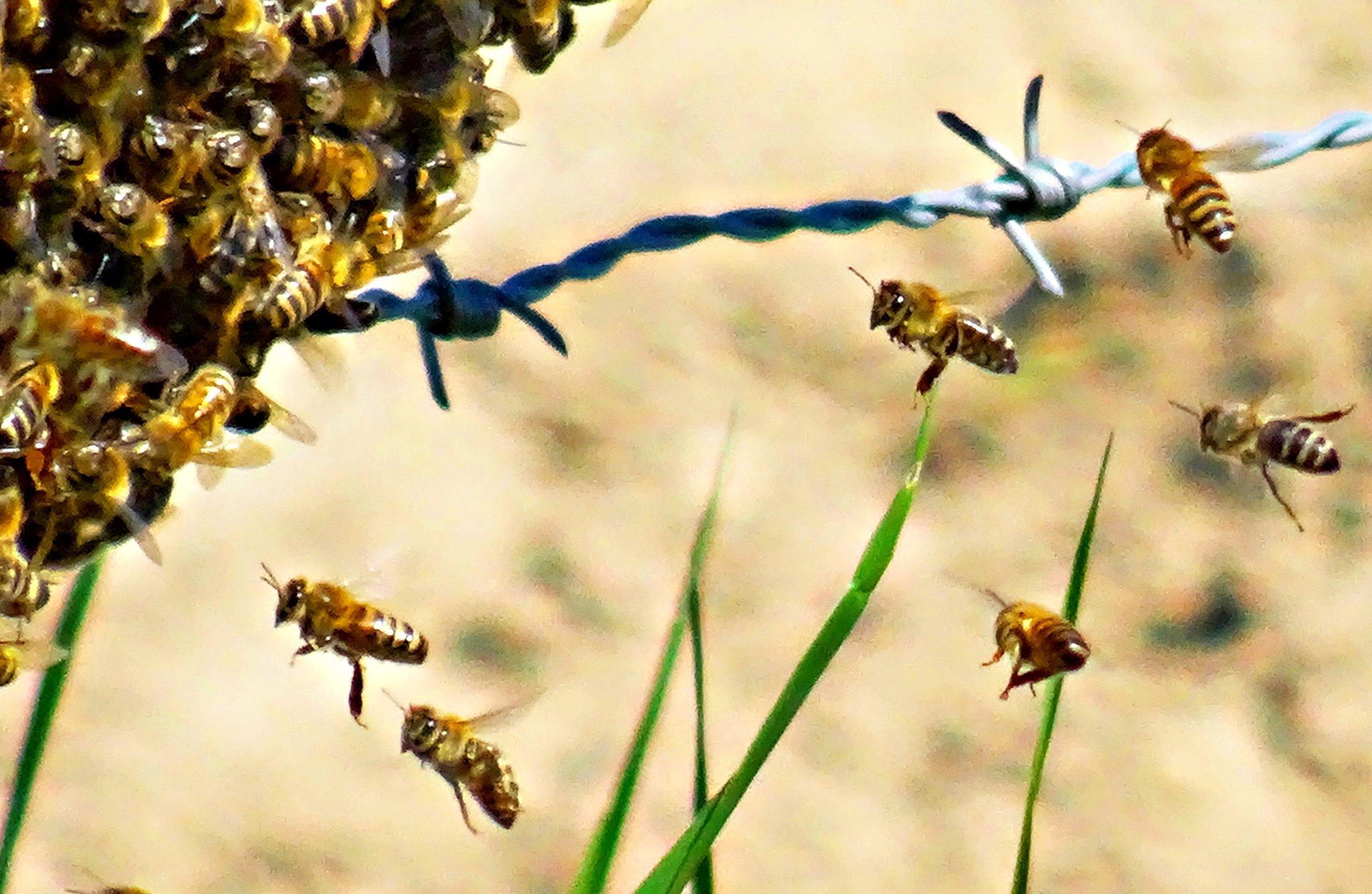 Europäische Union verbietet das Neonikotinoid Thiacloprid ab Mai 2020