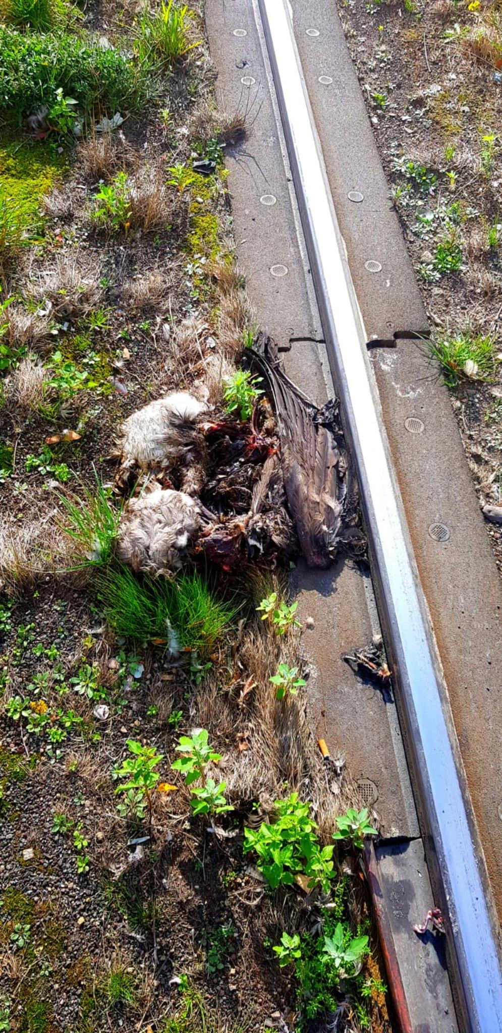 Rheinbahnunfälle mit Tieren - Düsseldorf - Lokalkompass.de