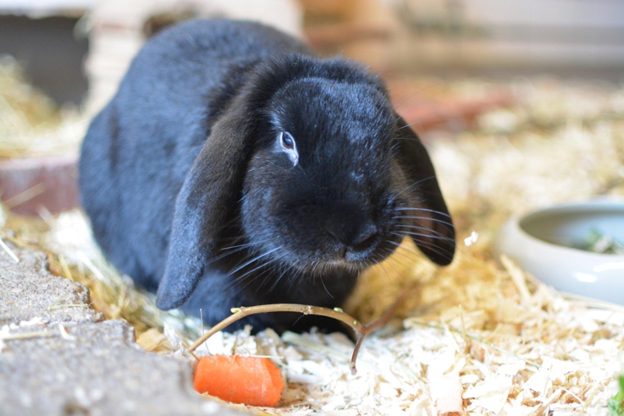 Kaninchenfamilie gesucht: Sanftmütiger Johnny allein im Heim - Lokalkompass.de