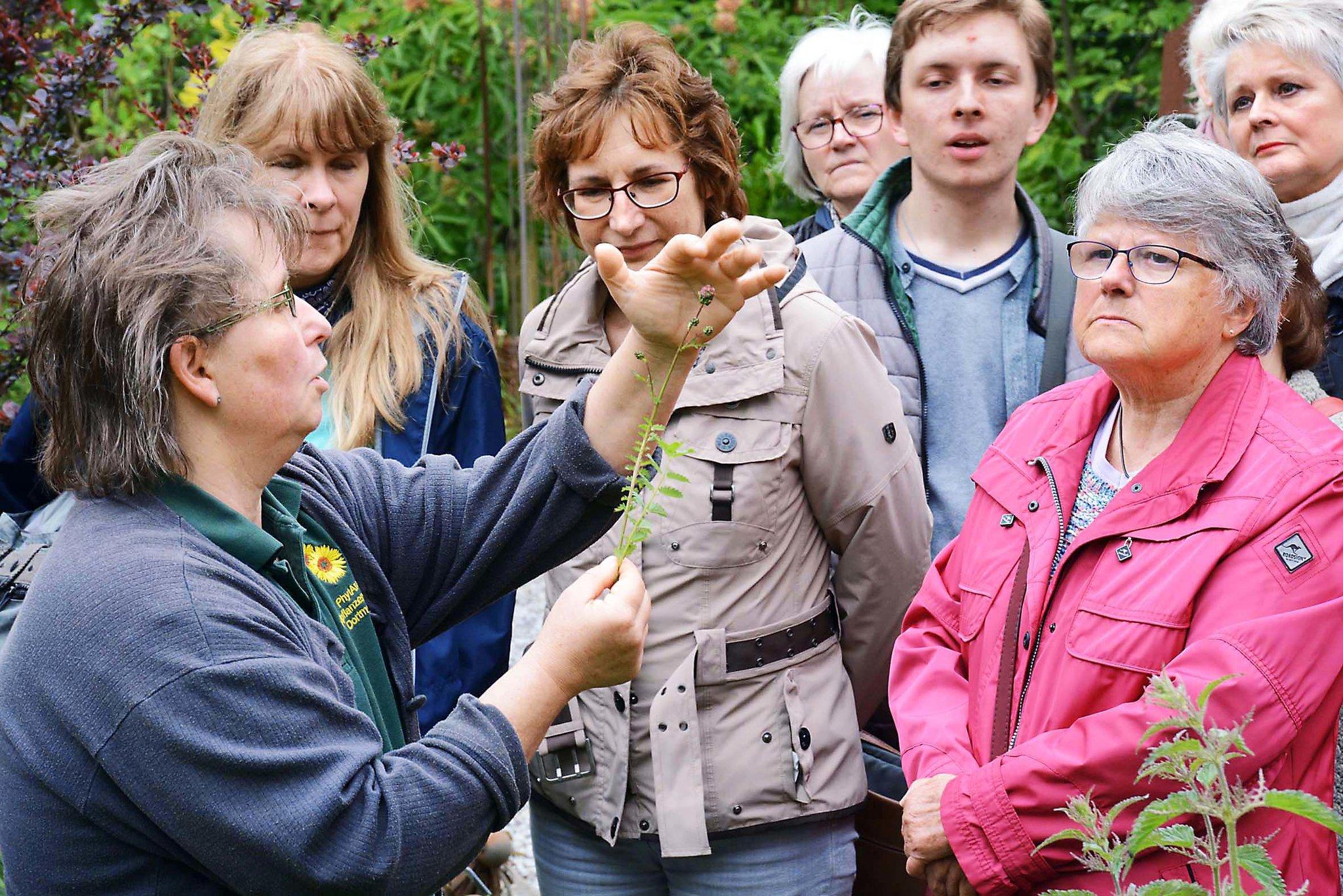 In der Heilpflanzenschule in Kirchderne: Efeu und Ilex sind Themen - Lokalkompass.de
