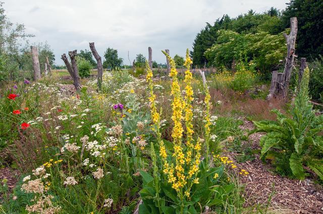 Natur Garten In Wesel