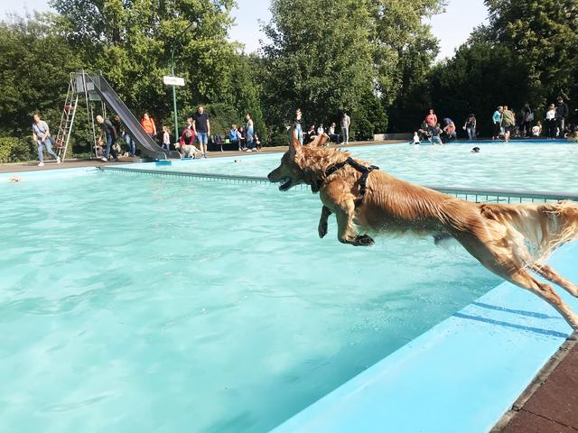 Hundeschwimmen Freibad