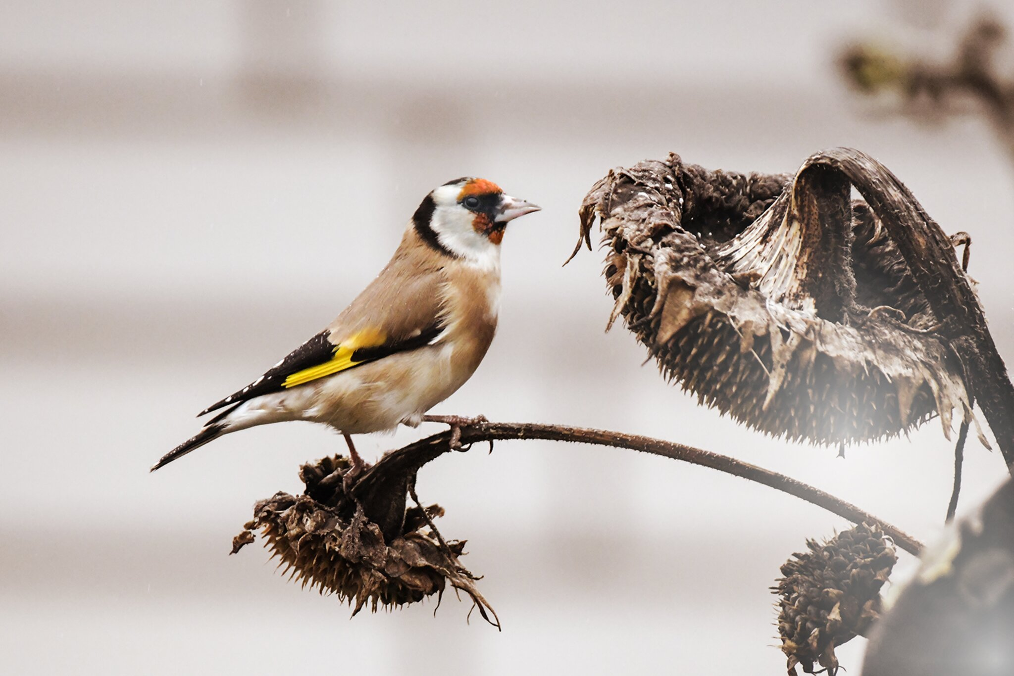 Trumpf: ... und fördert die Artenvielfalt - Sonsbeck...
