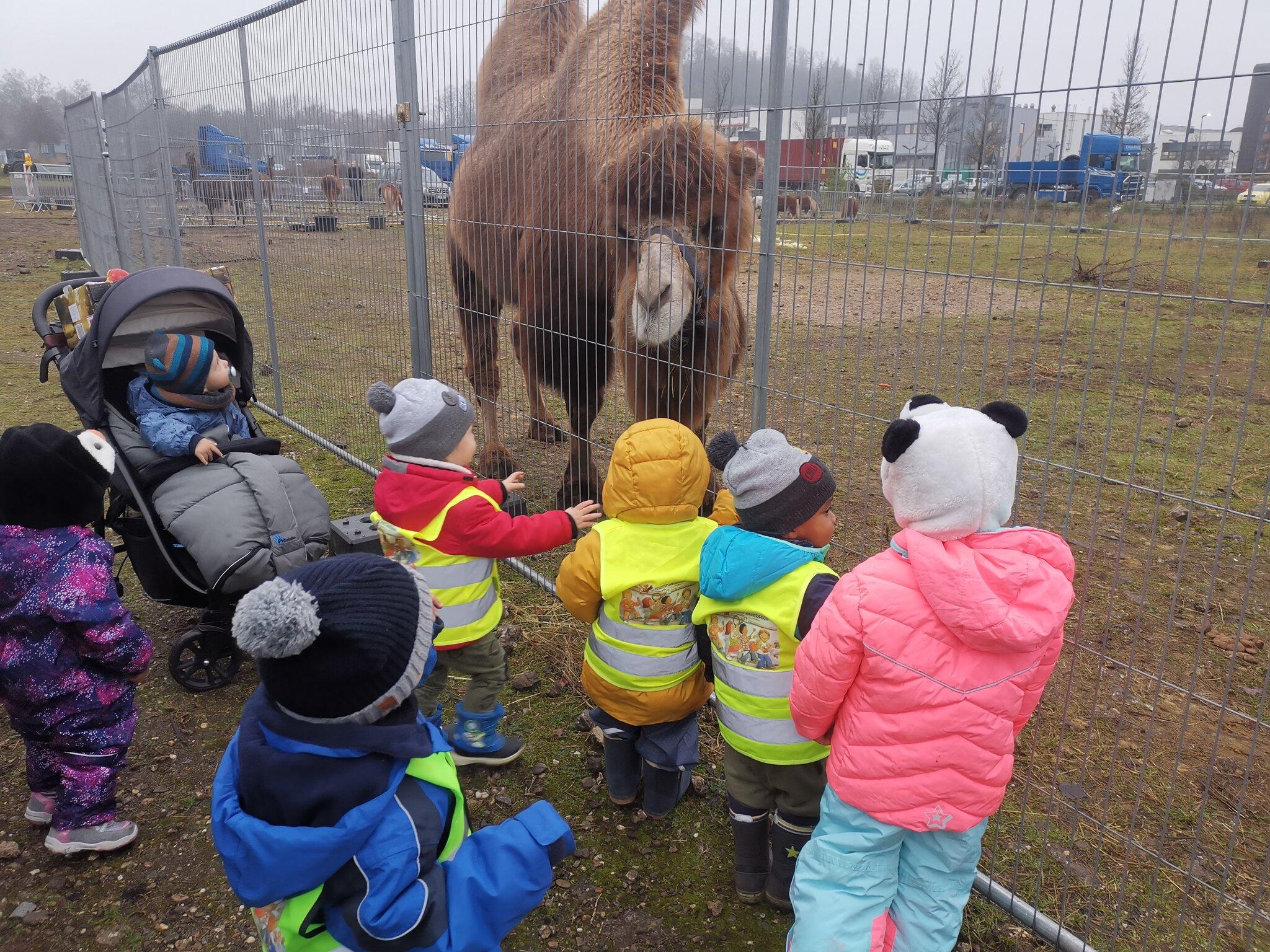 Circus Busch: Besuch bei den Circus Tieren (`,) -...