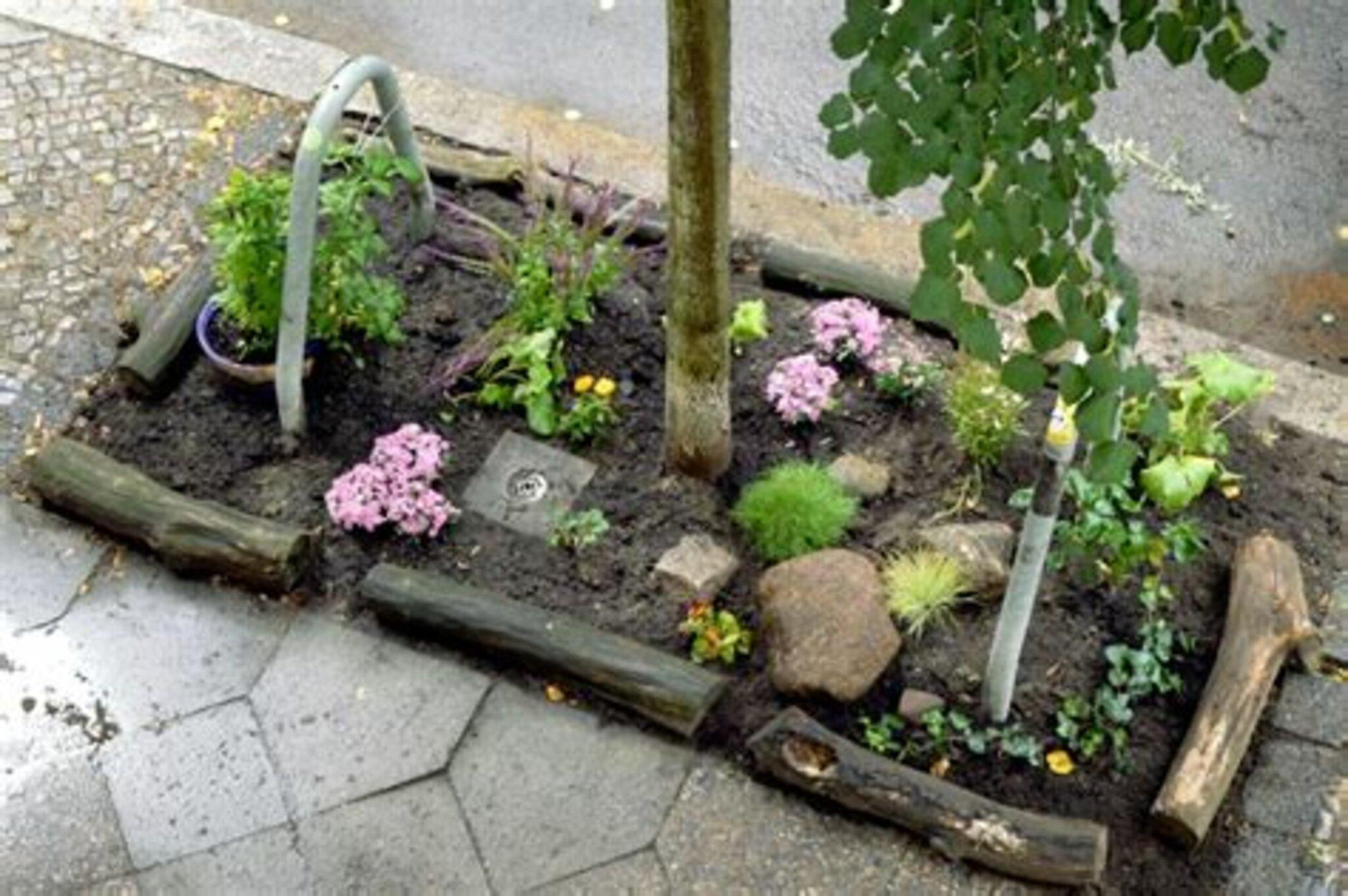 Baum  Straßenbeet: Austausch für Straßenbeet-PatInnen und Interessierte Online-Veranstaltung -...