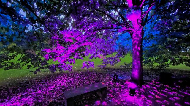 Disco zwischen Bäumen