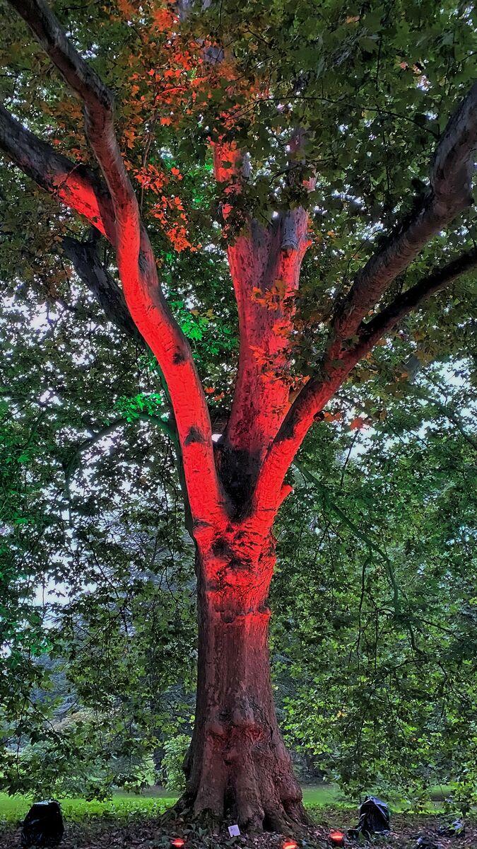 """Der """"Sprechende Baum"""" erzählt Geschichten aus der Vergangenheit des Schlosses."""