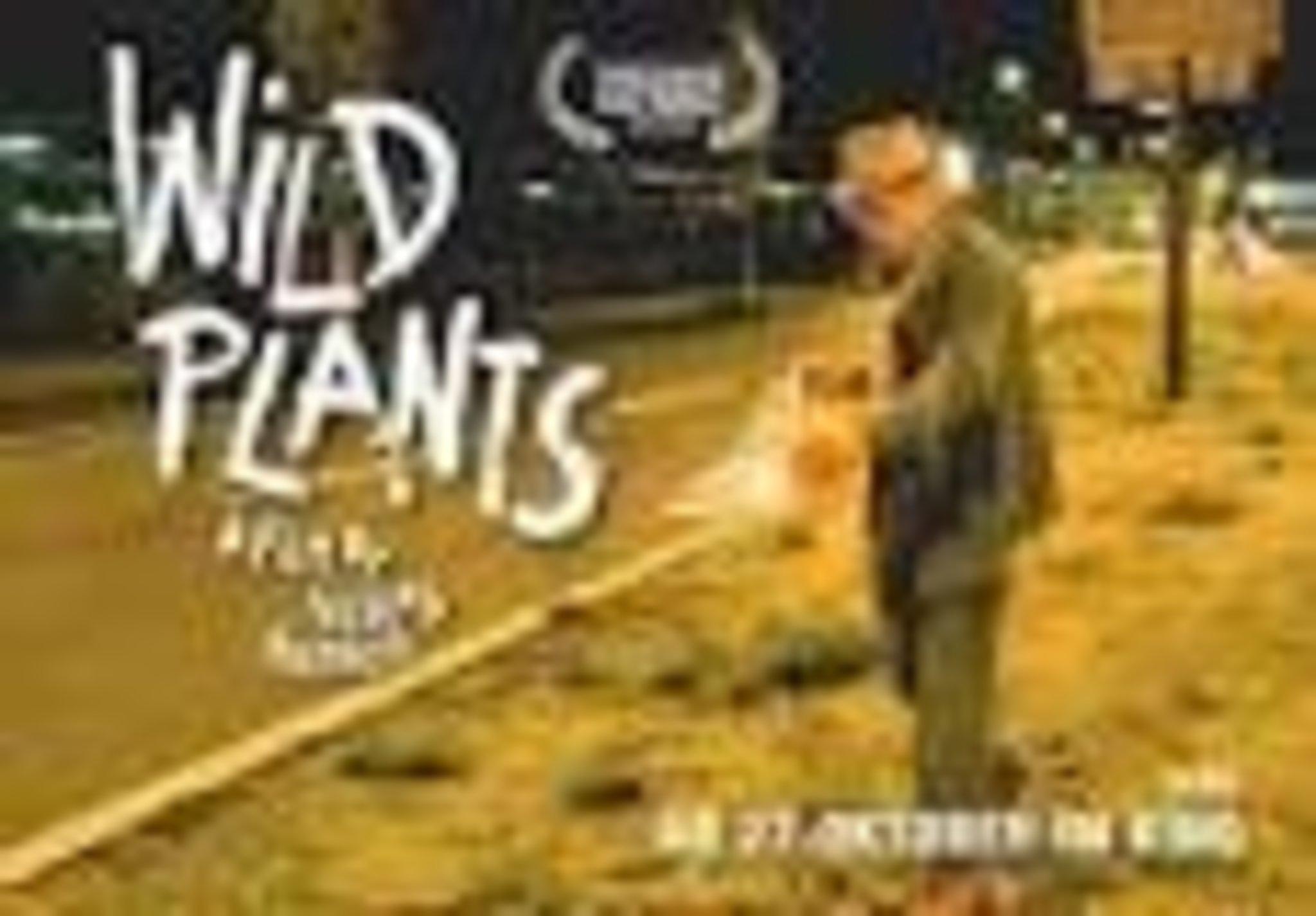 Kino Wild