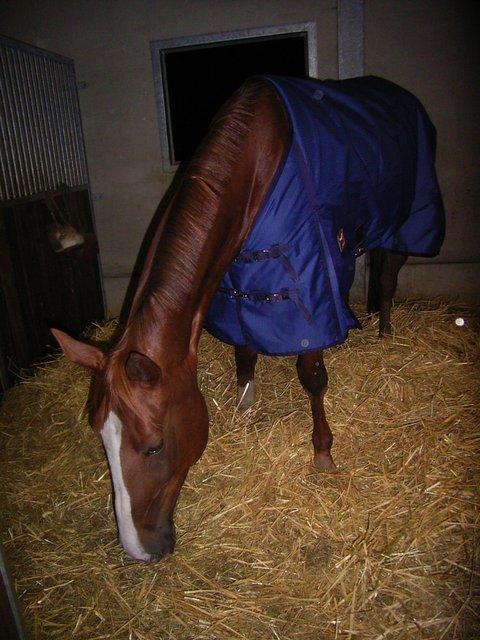 Pferd Kotzt