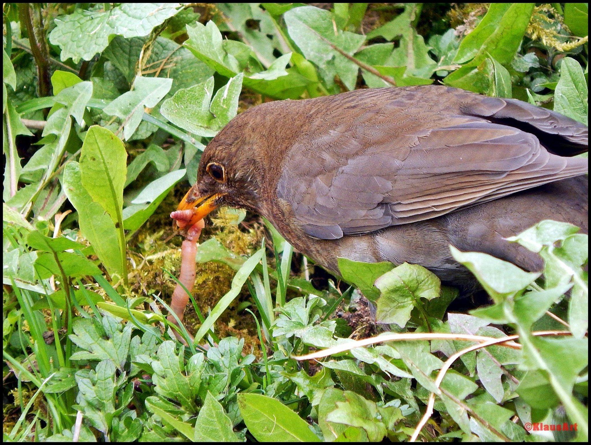 Der Frühe Vogel Fängt Den Wurm Alternative