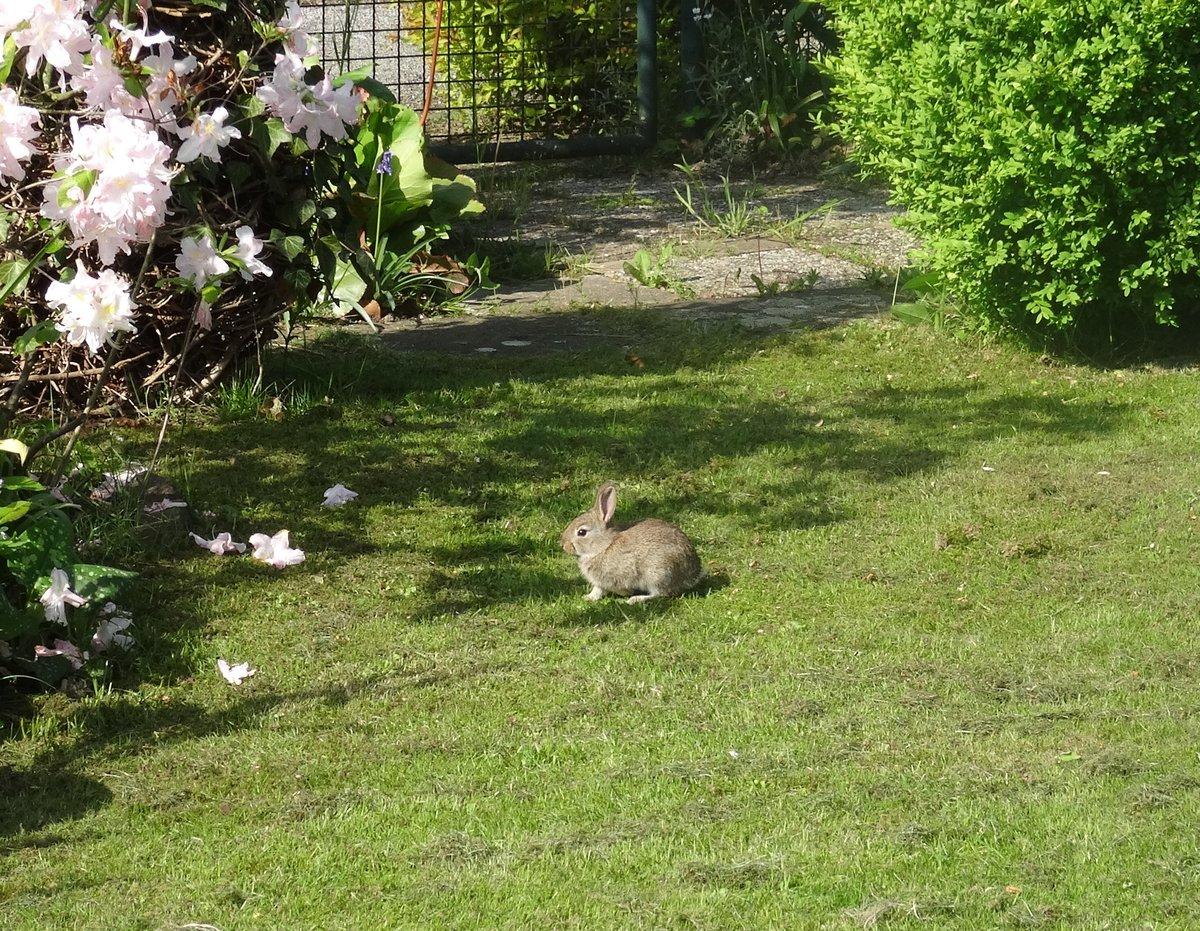 Ein Kaninchen Im Garten