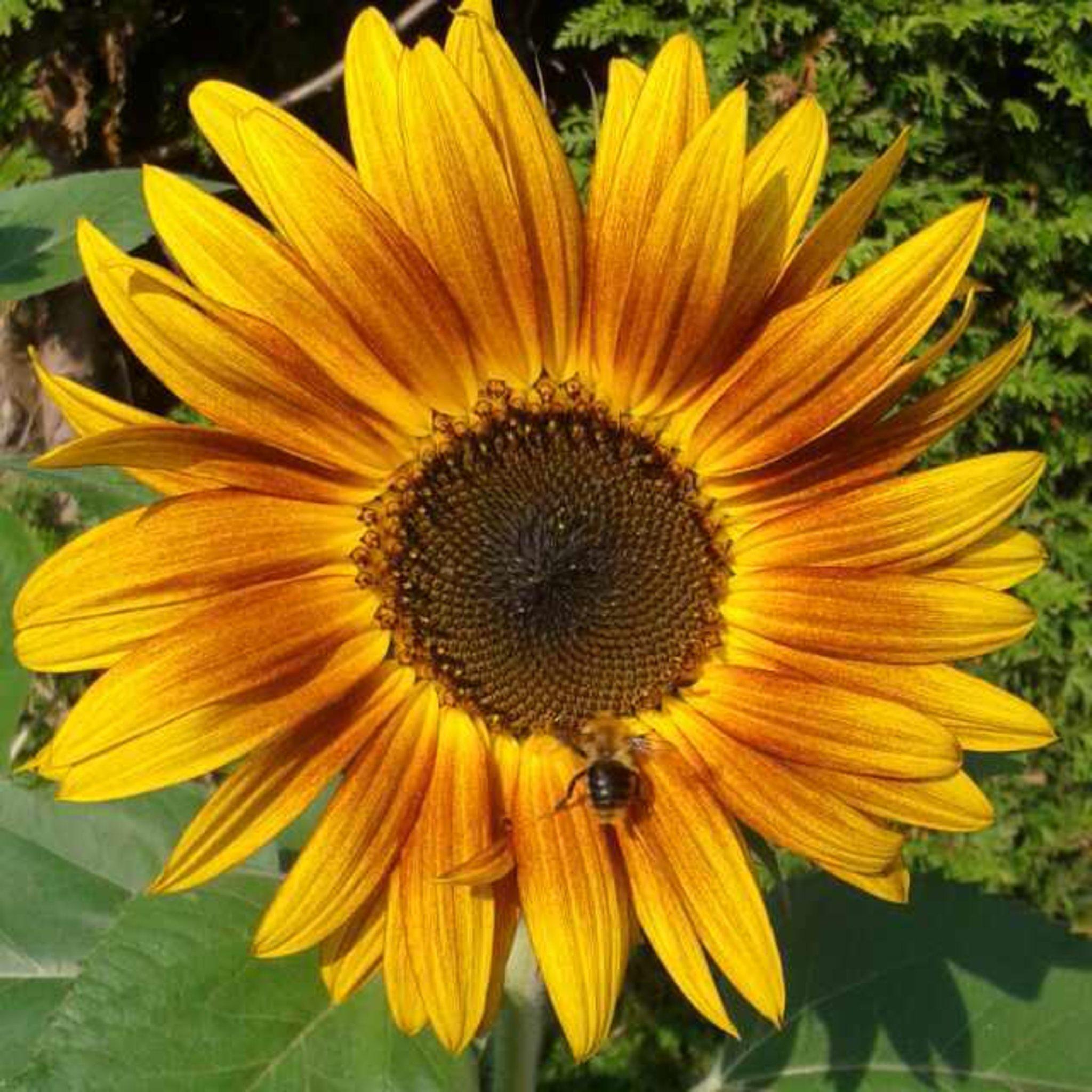 Zeit Für Eine Sonnenblume Einen Guten Start Ins