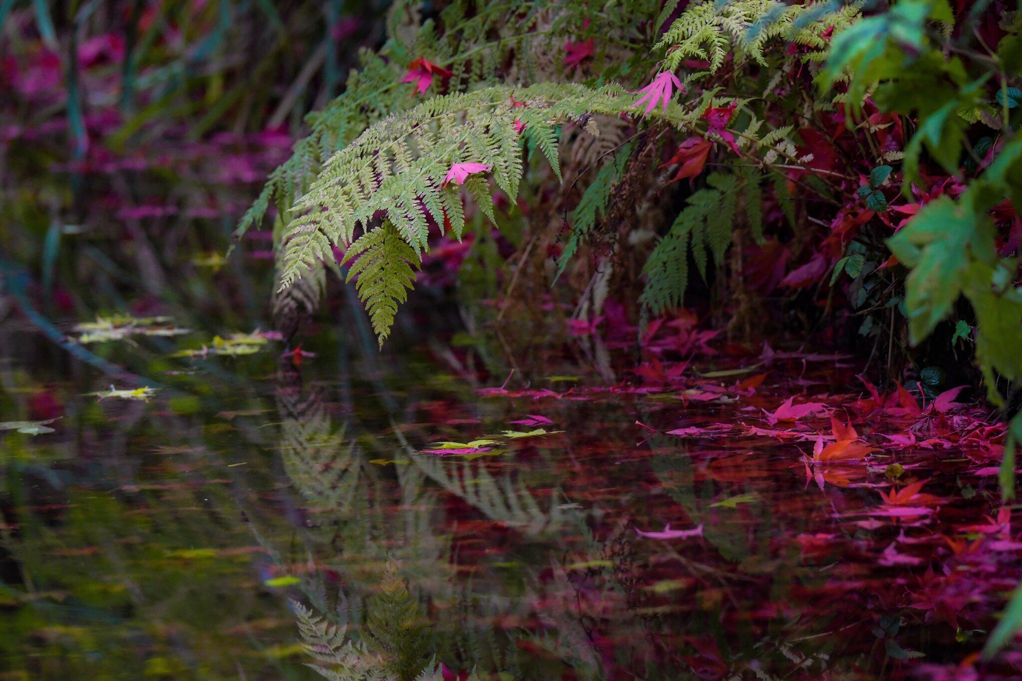 Die Farben Des Herbstes Stream